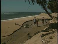 Hawaii Scene 5